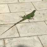 we even saw an iguana at the hotel!!