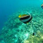 Snorkeling trip