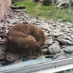 Beaver enclosure at Martin Mere