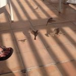 Little birds on the terrace!!