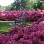 Gilcrease during azalea season