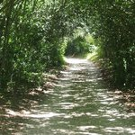 Jungle Gardens hedgerow path