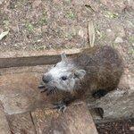 Tree Rat one of many :-)