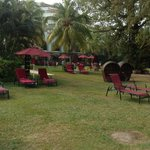 cosy garden with the palmtrees