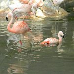 Flamingos at the entrance