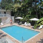 piscine dont la quiétude est assurée par la rangée de palmiers