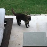 Animal visited our patio daily…cute but beware!