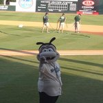 Sand Gnats mascot adorable Gnate!