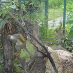 Zoologico, sin costo adicional