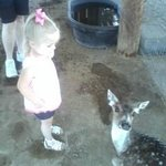 Petting Zoo