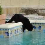Doudou et la piscine