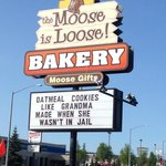 The moose is loose의 사진