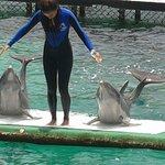 los delfines en pleno espectaculo