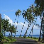 Vu le long de la route qui mène à la plage...et au reste