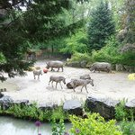 Rhinos and zebras at Lille zoo: better than on safari!