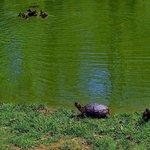 curious turtles