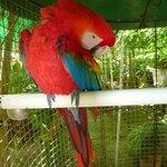 Parrots in the garden