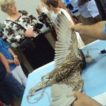 bird under anaesthetic for treatment