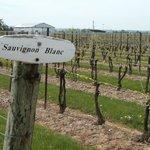 Reif Vineyards