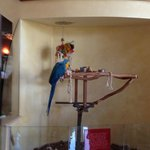 Hotel Lobby Pet Bird