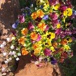 Beautiful flowers everywhere.