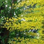Arbors of Gold