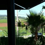 Looking across the vineyards