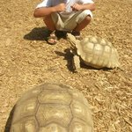 My son & a tortoise