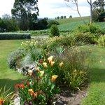 Liz's beautiful gardens