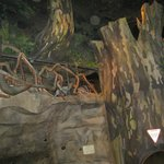 Kids crawl through the massive underground forest play area