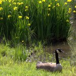 Flowers and geese everywhere