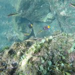 Cool fish and clear water-definitely snorkel w a go pro!