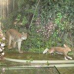 Lynx Exhibit