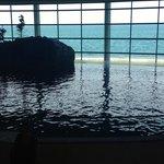 Lake Michigan view from the oceanarium