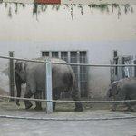 Слониха и малыш