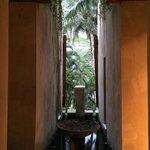A glimpse of the jungle