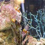 Aquarium & Exhibition - Where's Nemo