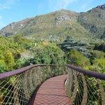 Canopy Walk Bridge