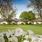 Hotel Gardens - All rooms situated in the lush green garden