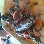 homard vivant