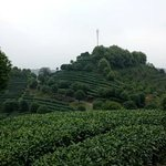 View from the Tea Plantation