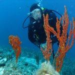 underwater flora...