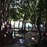 Bomen met zwemwater