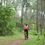 The Bukidnon Tree Park