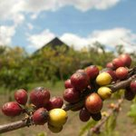 coffee beans, the monastery is at the background