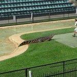 Croc Show