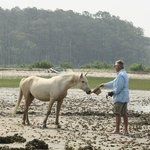 Assateague wild pony inspecting Capn Charlie