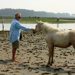"Assateague wild pony 'inspecting"" Charlie"