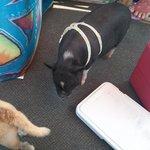 Penelope the Piggy