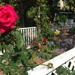 Beautiful rose gardens